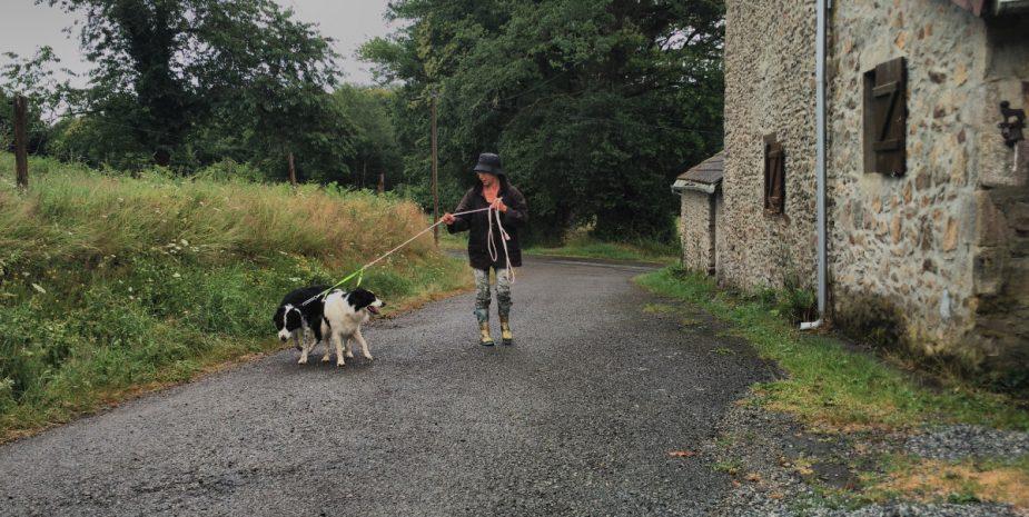 Promenade des chiens dans les chemins forestiers entourant Babine Pension, la pension canine et féline familiale située en campagne à quelques kms de Limoges